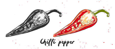 Vector engraved style illustration for posters, decoration and print. Hand drawn sketch of chilli pepper in monochrome and colorful. Detailed vegetarian food drawing. Ilustração
