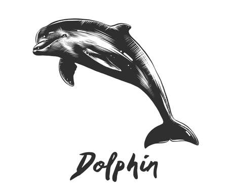 Vector engraved style illustration for posters, decoration and print. Hand drawn sketch of dolphin in monochrome isolated on white background. Detailed vintage woodcut style drawing.