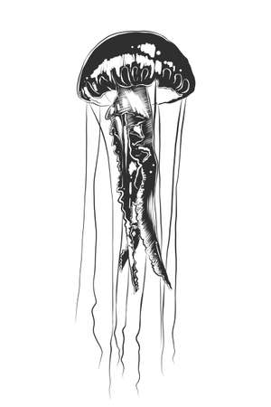 Vector engraved style illustration for posters, decoration and print. Hand drawn sketch of jellyfish in monochrome isolated on white background. Detailed vintage woodcut style drawing.
