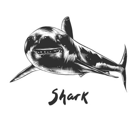 Vector engraved style illustration for posters, decoration and print. Hand drawn sketch of shark in monochrome isolated on white background. Detailed vintage woodcut style drawing. Vector Illustration