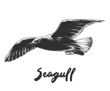 Vector engraved style illustration of seagull