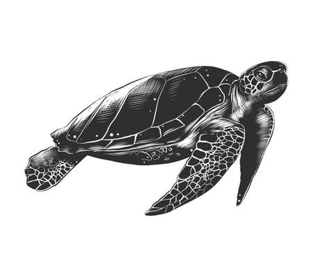 Vector engraved style illustration for posters, decoration and print. Hand drawn sketch of turtle in monochrome isolated on white background. Detailed vintage woodcut style drawing. Illustration