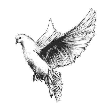 Vector engraved style illustration for posters, decoration and print. Hand drawn sketch of white dove in monochrome isolated on white background. Detailed vintage woodcut style drawing. Dove