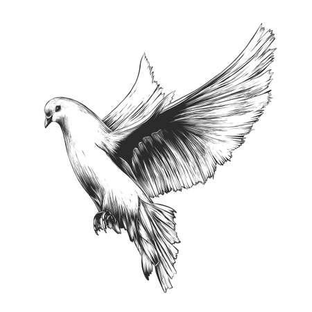 Vector gegraveerde stijlillustratie voor posters, decoratie en print. Hand getrokken schets van witte duif in zwart-wit geïsoleerd op een witte achtergrond. Gedetailleerde vintage houtsnede stijltekening. Duif