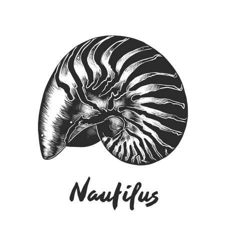 Vector engraved style illustration for posters, decoration and print. Hand drawn sketch of nautilus shell in monochrome isolated on white background. Detailed vintage woodcut style drawing.