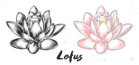 Ilustracja wektorowa grawerowane stylu plakatów, dekoracji i druku. Ręcznie rysowane szkic kwiatu lotosu w trybie monochromatycznym i kolorowym. Szczegółowy rysunek żywności wegetariańskiej.