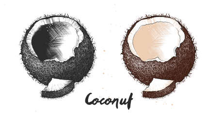Vector organic engraved style illustration for posters, decoration, label, packaging and print. Hand drawn sketch of coconut in monochrome and colorful. Detailed vegetarian food drawing.
