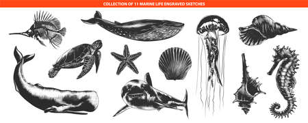 Vector engraved style sea life animals collection for posters, decoration and print Hand drawn sketches of in monochrome isolated on white background. Detailed vintage woodcut style drawing.