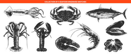 Vector engraved style sea food collection for posters, decoration and print Hand drawn sketches of in monochrome isolated on white background. Detailed vintage woodcut style drawing.