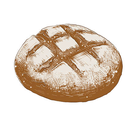 Vector engraved style illustration for posters, decoration and print. Hand drawn sketch of bread loaf in colorful isolated on white background. Detailed vintage woodcut style drawing.