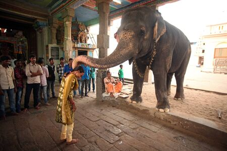KUMBAKONAM, INDIA - September 4, 2018 : Temple elephant blessing a man at kumbeswarar temple.