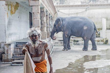 KUMBAKONAM, INDIA - September 4, 2018 : Pilgrim in the temple on the background of the sacred elephant