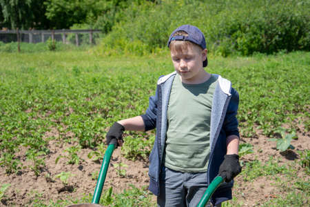 a boy with a big old wheelbarrow in the backyard in the outdoor garden. Childrens helper has fun pushing a wheelbarrow and gardening in the countryside Banque d'images