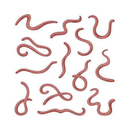 Collection of earthworms. Set of worms. Illustration of animal, nature, fishing, earth and ground. Иллюстрация