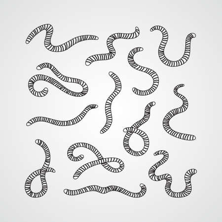 Collection of worms. Illustration of animal, nature, fishing, earth and ground. Set of earthworms.