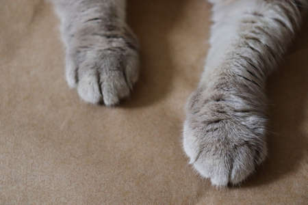 Cat's paws lie on craft paper. Concept of home, comfort, animal care, natural materials and packaging. Gray hair, fluffy pet. Calm tones