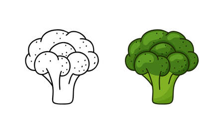 Broccoli doodle icon. Linear and color version. Black simple illustration of green vegetable. Contour isolated vector pictogram on white background