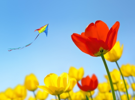 Kite flying soars into the sky over the flowers