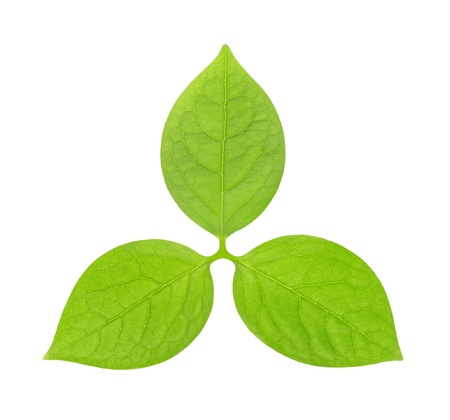 green leaves in the form of the emblem or logo on a white background photo