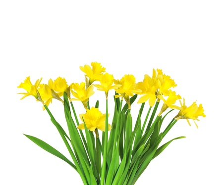Bouquet of flowers of Daffodils on white background photo