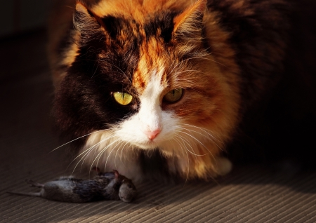 catfood: Cat and Mouse. Cat killed the mouse and going to eat. Stock Photo