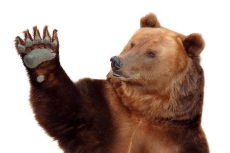 곰은 그의 발을 흔들며 환영