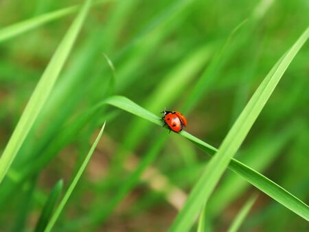 coccinellidae: Ladybird hop off