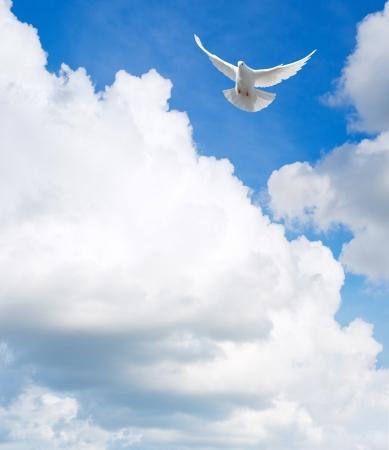 paloma: Paloma blanca volando en el cielo