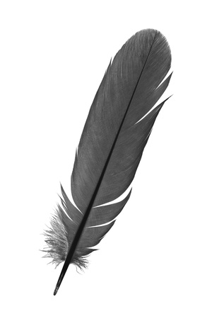 feather on a white background photo