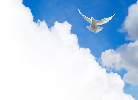 soar: Paloma blanca volando en el cielo con una plantilla de cuadro de texto Foto de archivo