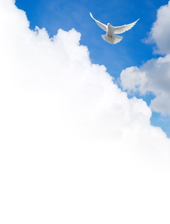 espiritu santo: Paloma blanca volando en el cielo. Plantilla con un campo de texto.