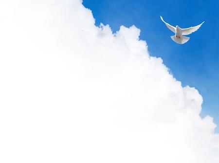 空を飛ぶ白い鳩