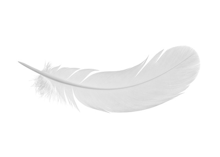 feather on a white background 版權商用圖片