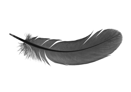 black feather: feather on a white background Stock Photo