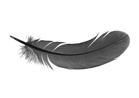 piuma bianca: penna su uno sfondo bianco Archivio Fotografico