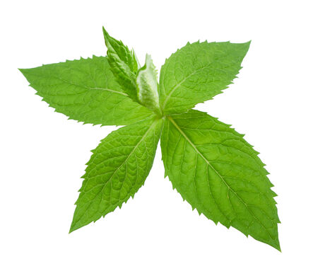 spearmint: mint leaves on white background Stock Photo