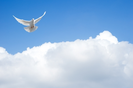 holy spirit: White dove flying in the sky
