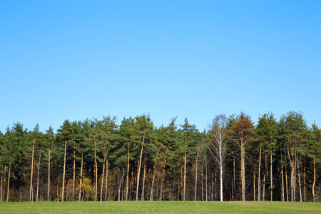 marge: forest edge against the blue sky