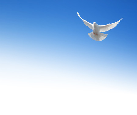 religious text: White dove flying in the sky.