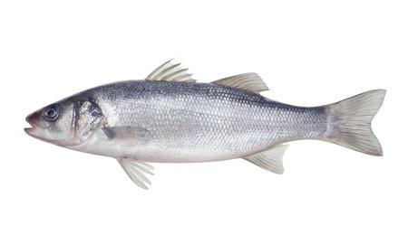 흰색 배경에 물고기 seabass 격리 됨 스톡 콘텐츠