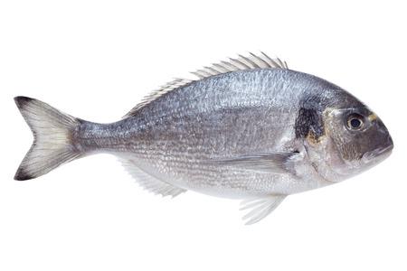 白の背景に Dorado 魚