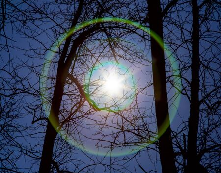 portent: sun or another star shines through the trees with lens flare