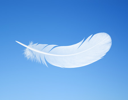 gravedad: pluma en el fondo de cielo azul