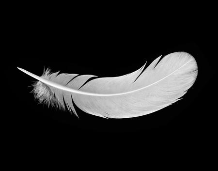 White feather on black background Standard-Bild