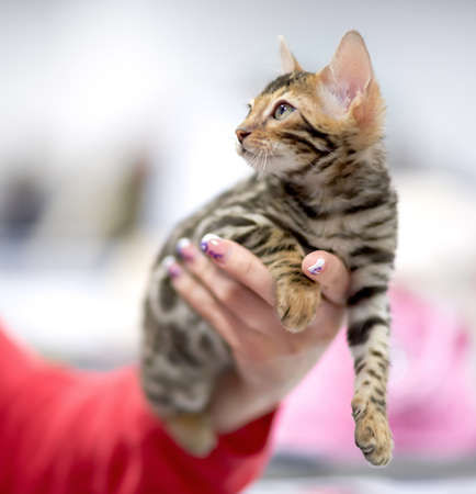 human arm: kitten in a female hand looking somewhere up Stock Photo