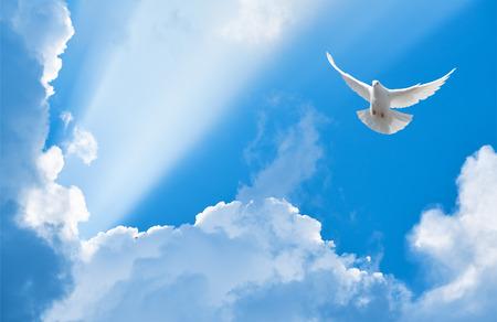 Witte duif vliegen in de stralen van de zon tussen de wolken