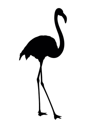 stroll: Vector silhouette of flamingo on white background
