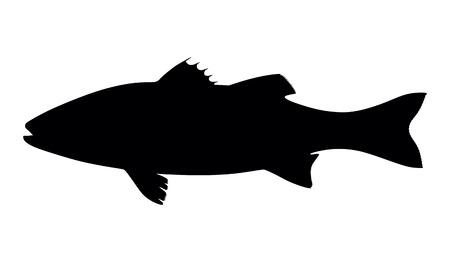 silhouette spigola di pesce su sfondo bianco, illustrazione vettoriale Vettoriali