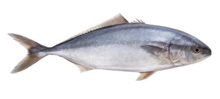 fish tuna Isolated on the white background Stock Photo