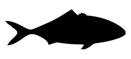Silhouette of tuna fish on white background. Vector illustration. 向量圖像
